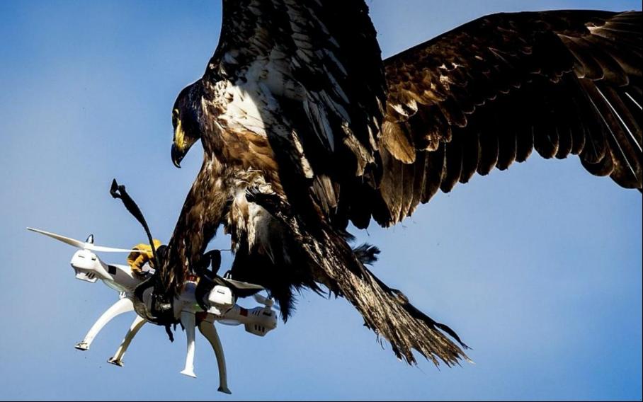 dron a orol